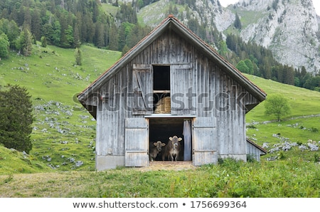 納屋 牛 屋外 フランス語 ブラウン 風景 ストックフォト © ivonnewierink