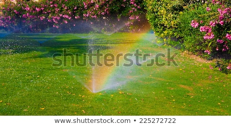 Automatic watering system for new fresh lawn Stock photo © brebca