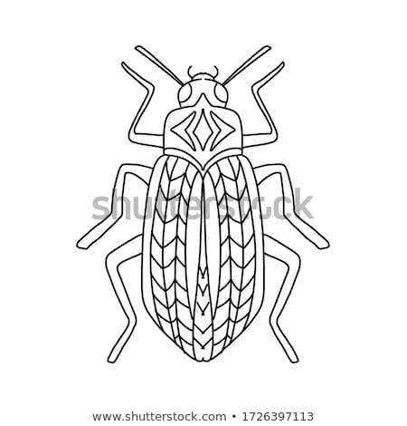 黒 · カブトムシ · 春の花 · 昆虫 · 黄色の花 - ストックフォト © ansonstock