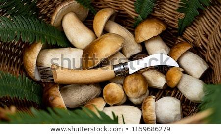 バスケット 異なる 食用 キノコ ナイフ 料理 ストックフォト © dolgachov