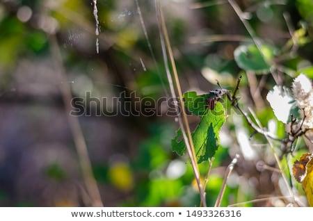 Preto bicho canto branco bom antena Foto stock © gewoldi