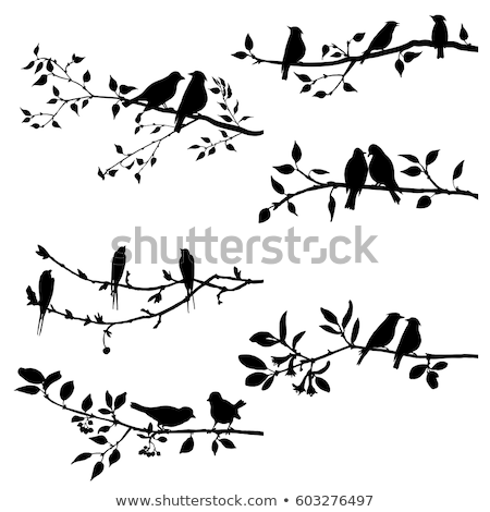 birds on branch tree vector illustration stock photo © elak