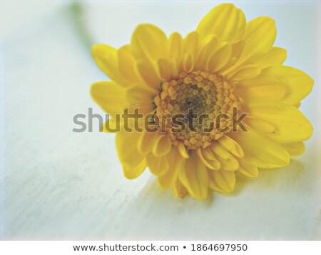 Egy sárga virág textil közelkép stúdió fotózás Stock fotó © boroda