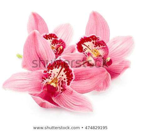 turuncu · orkide · şube · taze · çiçekler · pot - stok fotoğraf © tetkoren