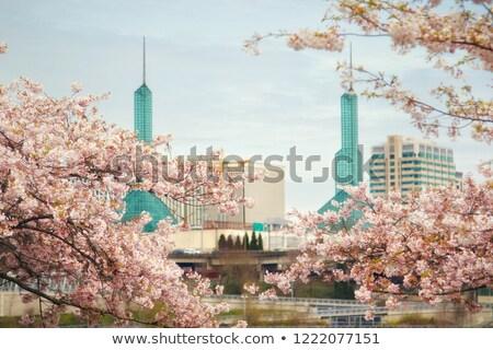Сток-фото: Cherry Blossoms With Portland City Skyline
