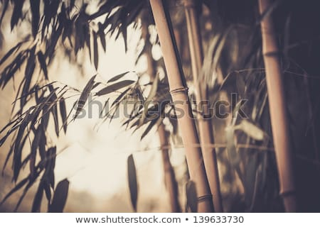 Toned picture of a bamboo plant Stock photo © Nejron