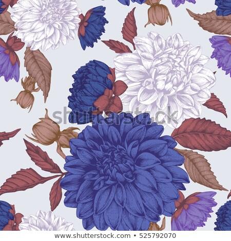 Blauw paars dahlia bloem bloeien Stockfoto © stocker