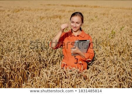 ученого цифровой таблетка пшеницы Сток-фото © HighwayStarz