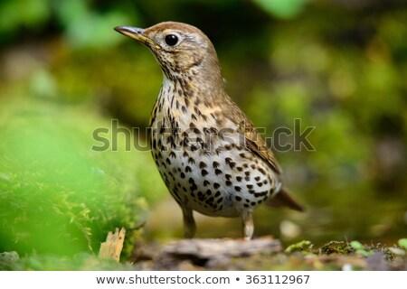 Sauvage oiseau bois photo jardin Photo stock © Dermot68