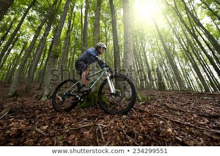 Mountain bike floresta ponto ver bicicleta verde Foto stock © tilo