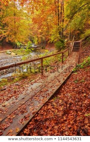 Autumn landscape with bridge in  Pushkin, Stock photo © Pilgrimego