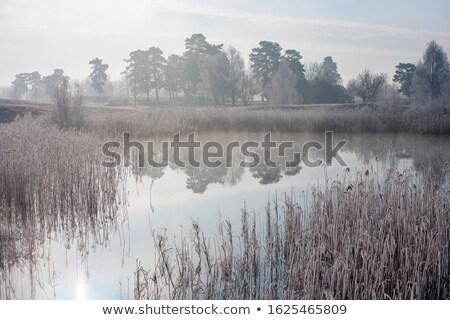 Reeds in winter landscape Stock photo © olandsfokus