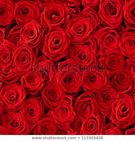 Plenty red natural flowers seamless background Stock photo © art9858
