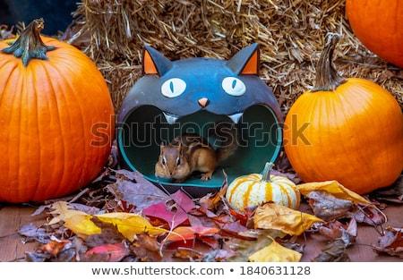 белку Хэллоуин оранжевый конфеты осень празднования Сток-фото © adrenalina