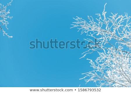 Mroźny zimą drzew refleksji wody tle Zdjęcia stock © mady70