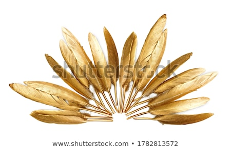 gold rooster Stock photo © blackmoon979