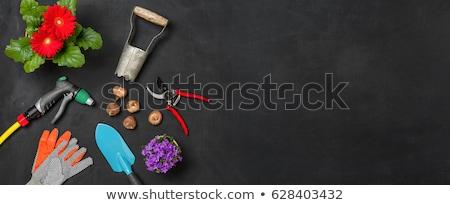 Foto stock: Jardim · ferramentas · escuro · cópia · espaço · flor · primavera