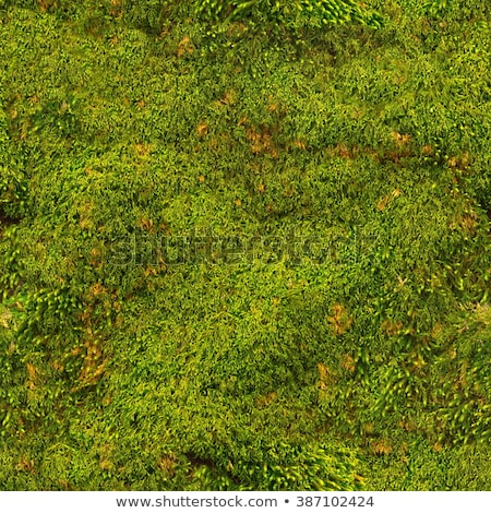 Moss seamless texture closeup background. Stock photo © Leonardi