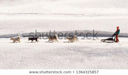 Hond race sneeuw Frankrijk veld Stockfoto © vwalakte