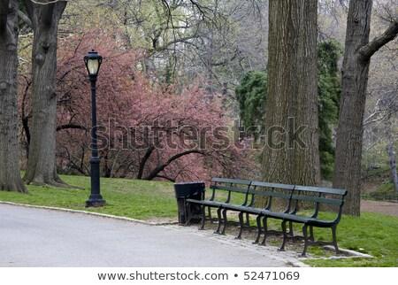 скамейке мусорный ящик полный природы трава мебель Сток-фото © tepic