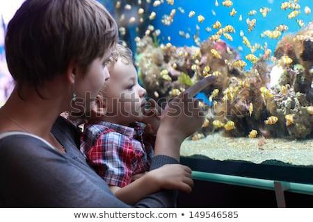 Boy admiring fish in aquarium Stock photo © IS2