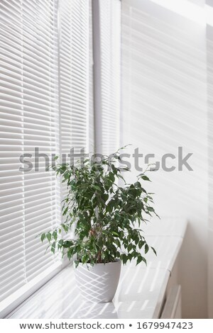 Window blinds and bushes Stock photo © IS2