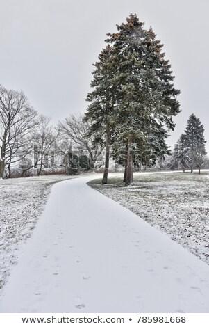 neve · coberto · conjunto · blue · sky · céu · floresta - foto stock © backyardproductions