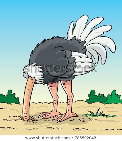 Scared Cartoon Ostrich Stock photo © cthoman