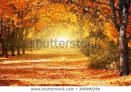 Outono beco ver parque árvore laranja Foto stock © boggy