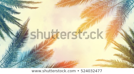 ee7d001add6 Sea scene with coconut frame vector illustration © Matthew Cole ...