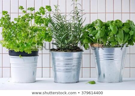 ножницы · свежие · трава · зеленая · трава · весны - Сток-фото © simply