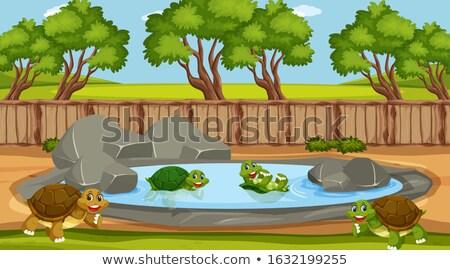 животные · пруд · сцена · иллюстрация · небе · фон - Сток-фото © colematt
