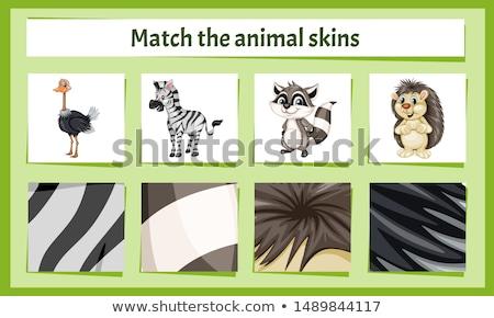 Indovinare animali selvatici attività ragazzi cartoon illustrazione Foto d'archivio © izakowski