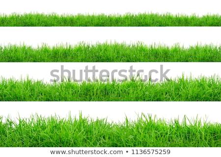 green grass borders big collection transparent background stock photo © adamson