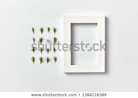 春 工場 パターン 小さな 松 針 ストックフォト © artjazz