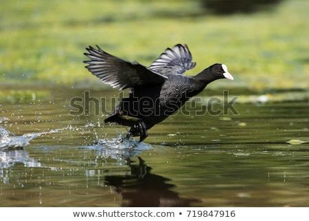 Lid rail vogel familie water meer Stockfoto © lightpoet