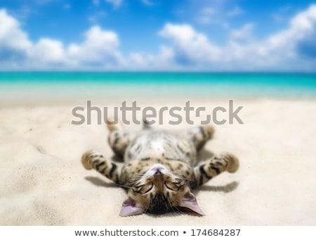 isla · tropical · imagen · agua · naturaleza · arte · palma - foto stock © colematt