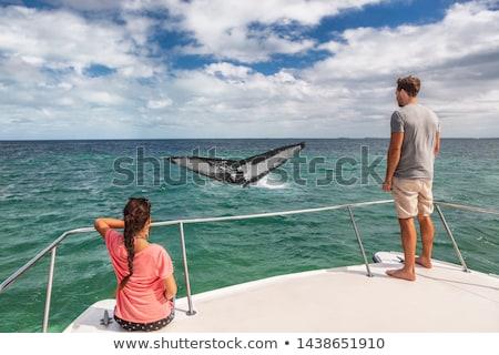Wal beobachten Boot Tour Touristen Menschen Stock foto © Maridav