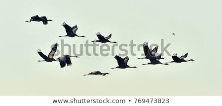 Madár vándorlás sereg vad madarak narancs Stock fotó © Anna_Om