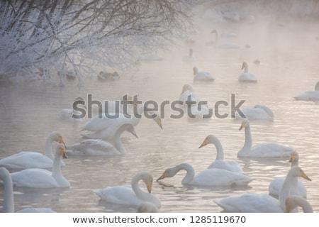 Belo branco mulher inverno lago lugar Foto stock © olira