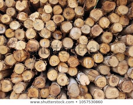 Natural bark Stock photo © aladin66