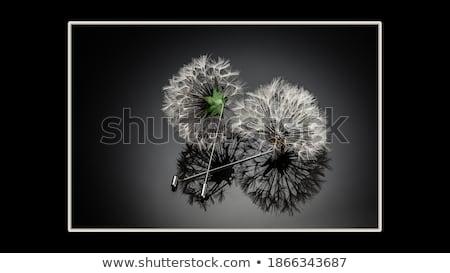 Csecsebecsék fényes gyöngy nyaklánc kék karkötő Stock fotó © zakaz