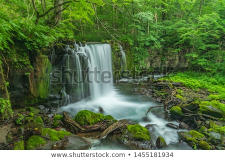 Oirase stream in spring Stock photo © yoshiyayo