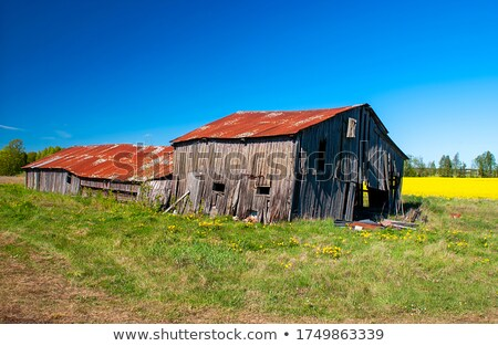 風化した 古い 納屋 牛 歴史的 ストックフォト © Kenneth_Keifer