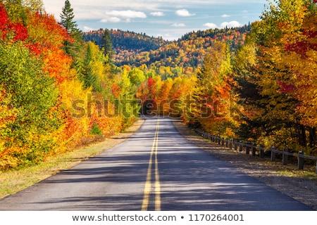 Cair céu floresta paisagem Foto stock © jaymudaliar