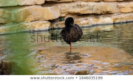 Backed leg of goose Stock photo © samsem