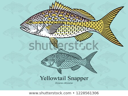 Kuyruk detay balık mavi göz mutfak Stok fotoğraf © lunamarina