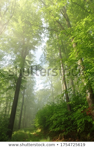 Photo stock: Chemin · chêne · forêt · printemps · nature · feuille