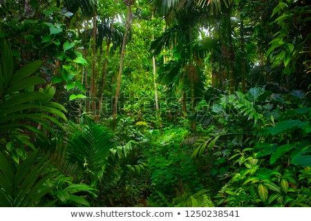 Stock photo: tropical rain forest with waterfall