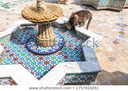 Mozaik gyártás Marokkó művészet csillag ujj Stock fotó © haraldmuc
